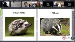 Un docente che mostra foto di animali durante la lezione